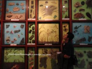 Tembok Diorama Flora